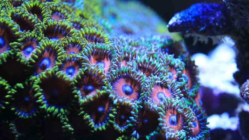 Akuarium Air Laut